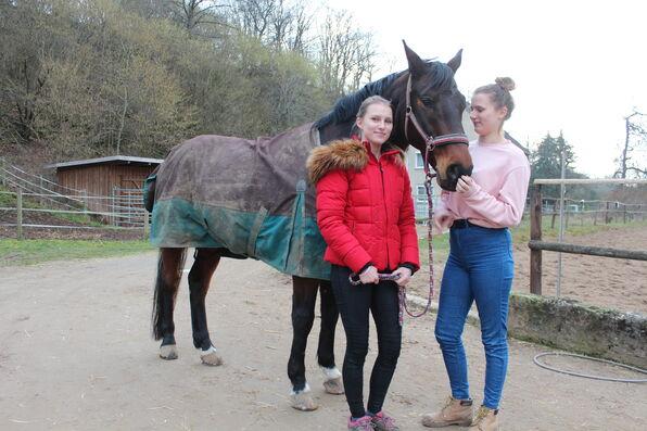 Story mit pferd Das Pferd